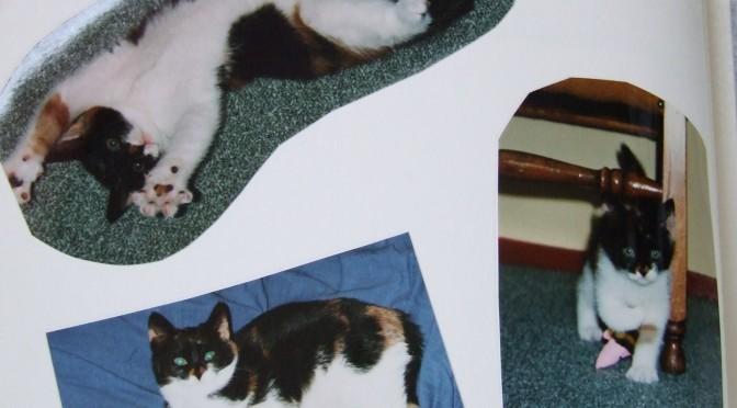 Lizzy als kitten